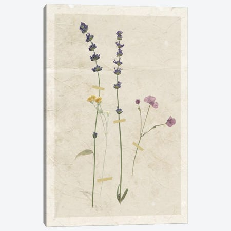 Pressed Lavender II Canvas Print #CRO372} by Carol Robinson Art Print