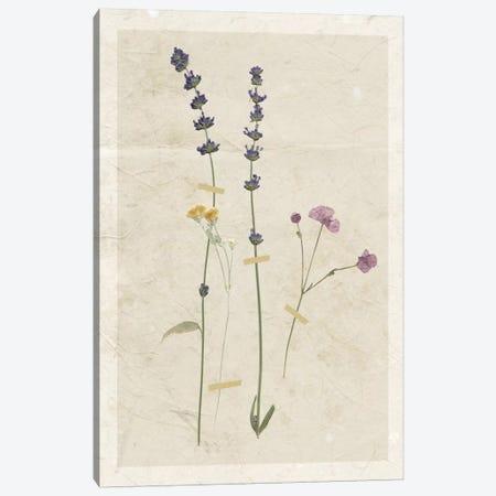 Pressed Lavender II Canvas Print #CRO372} by Carol Robinson Art Print