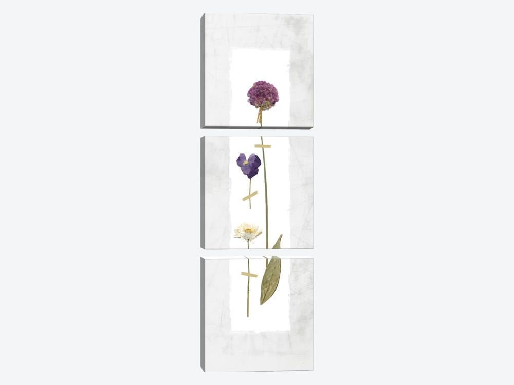 Pressed Panel I by Carol Robinson 3-piece Canvas Print
