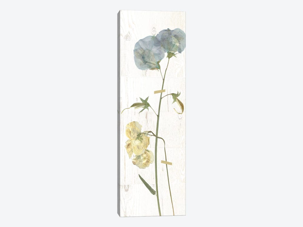 Pressed Sweet Pea I by Carol Robinson 1-piece Art Print