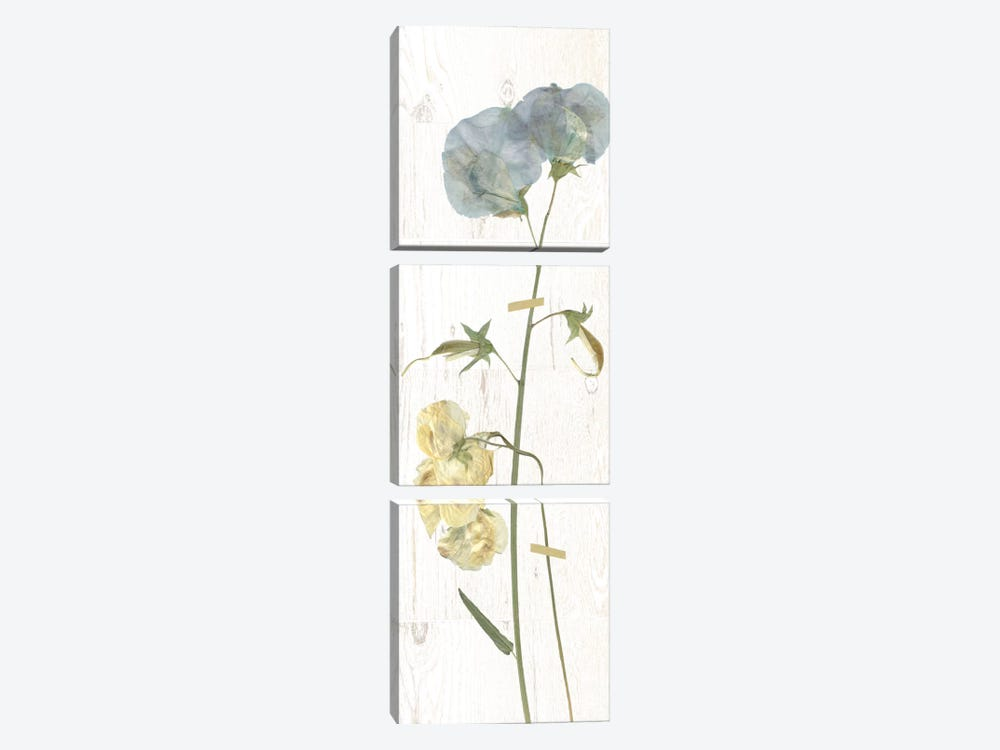 Pressed Sweet Pea I by Carol Robinson 3-piece Canvas Print