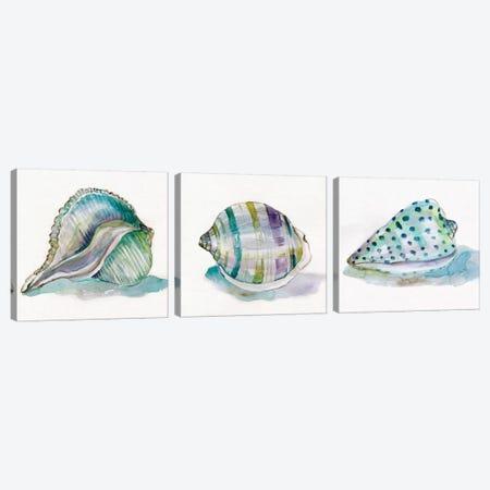 Malecon Shell Triptych Canvas Print Set #CRO3HSET002} by Carol Robinson Canvas Wall Art
