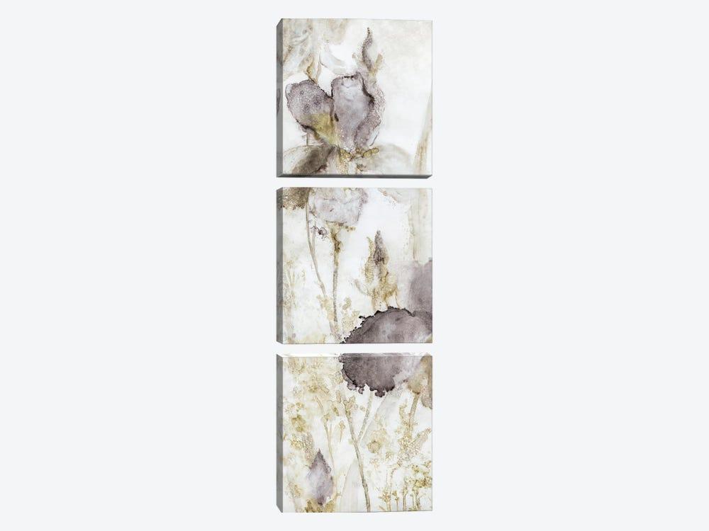 Dawn Iris by Carol Robinson 3-piece Canvas Wall Art