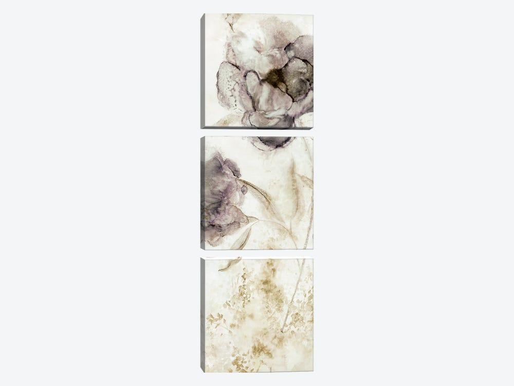 Dawn Peony by Carol Robinson 3-piece Canvas Art Print