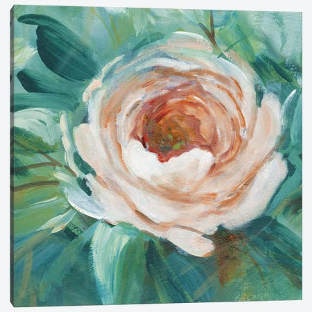 Coral Canvas Print #CRO423} by Carol Robinson Art Print