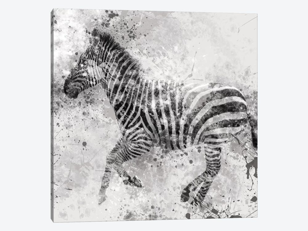 Zebra II by Carol Robinson 1-piece Canvas Artwork