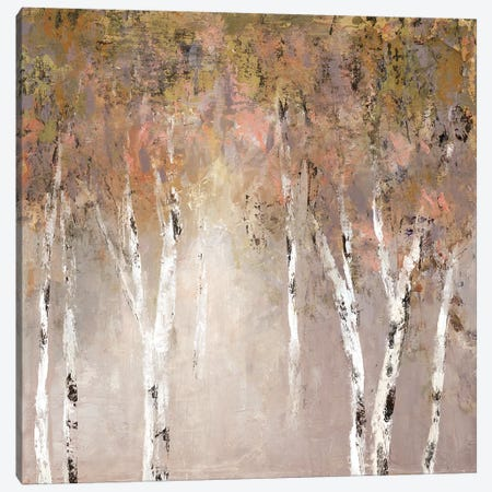 Sunlit Birch I Canvas Print #CRO550} by Carol Robinson Canvas Art Print