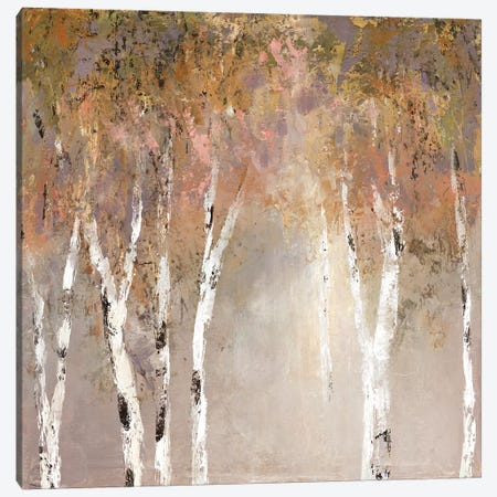 Sunlit Birch II Canvas Print #CRO551} by Carol Robinson Canvas Print