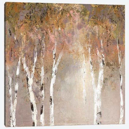 Sunlit Birch II Canvas Print #CRO551} by Carol Robinson Canvas Print