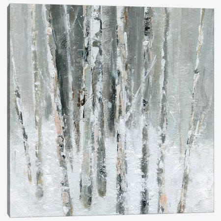 Birch Blush II Canvas Print #CRO569} by Carol Robinson Canvas Art