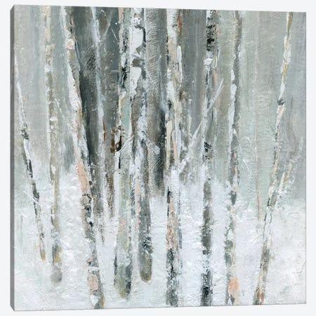 Birch Blush II Canvas Print #CRO569} by Carol Robinson Canvas Art
