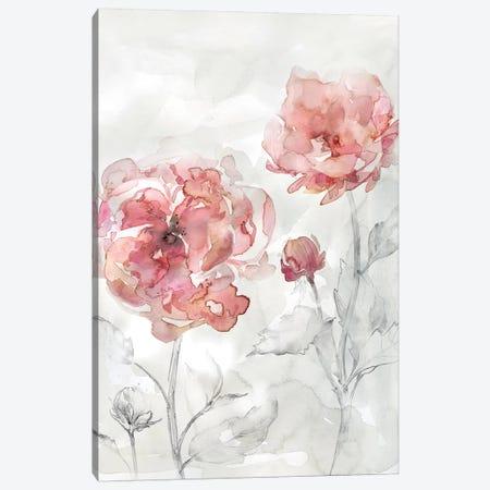 Blush Botanical II Canvas Print #CRO573} by Carol Robinson Canvas Art Print