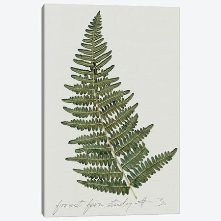 Fern Studies I 3-Piece Canvas #CRO595} by Carol Robinson Canvas Art