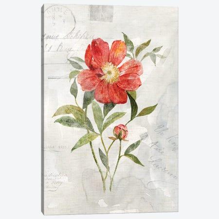 Linen Peony Canvas Print #CRO617} by Carol Robinson Canvas Print