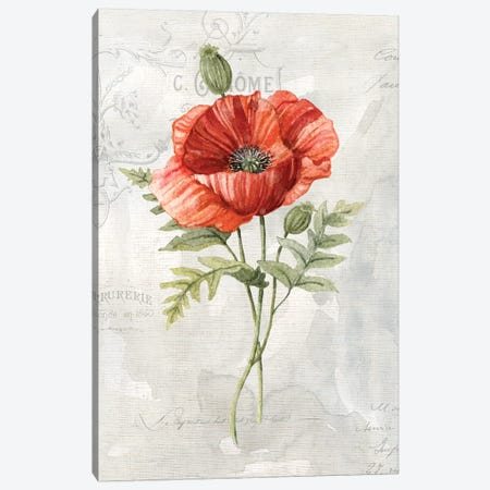 Linen Poppy Canvas Print #CRO618} by Carol Robinson Canvas Art