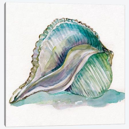 Malecon Shell I Canvas Print #CRO638} by Carol Robinson Canvas Art
