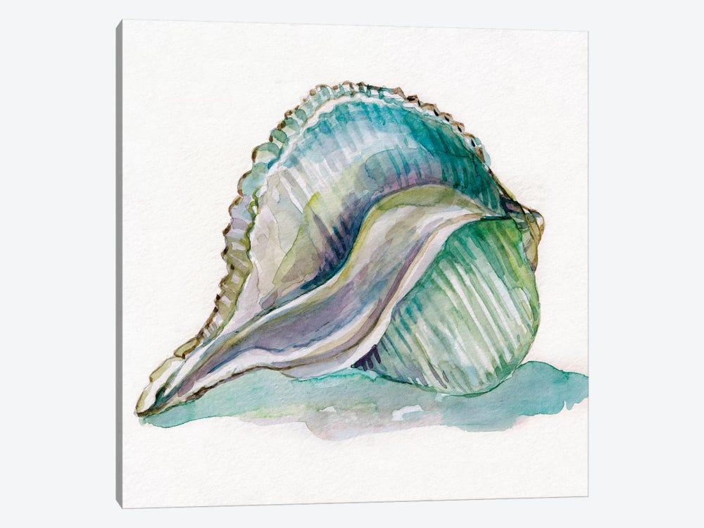 Malecon Shell I by Carol Robinson 1-piece Canvas Art