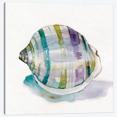 Malecon Shell III Canvas Print #CRO639} by Carol Robinson Canvas Art