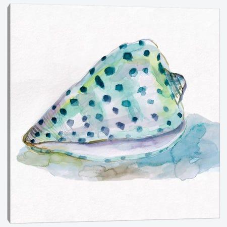 Malecon Shell IV Canvas Print #CRO640} by Carol Robinson Canvas Print