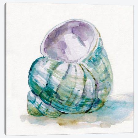 Malecon Shell V Canvas Print #CRO641} by Carol Robinson Canvas Print