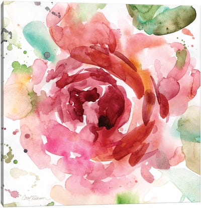 Bold Blush III Canvas Print #CRO64