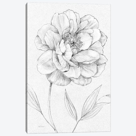 Peony Sketch Canvas Print #CRO658} by Carol Robinson Canvas Wall Art