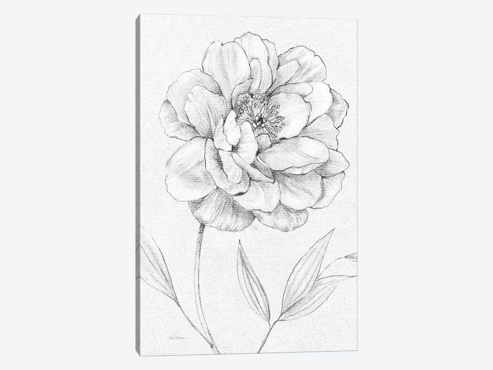 Peony Sketch by Carol Robinson 1-piece Canvas Artwork