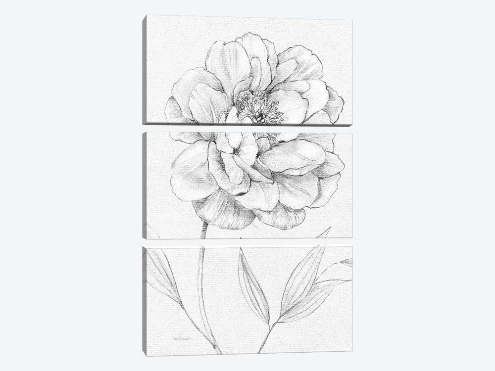 Peony Sketch by Carol Robinson 3-piece Canvas Art