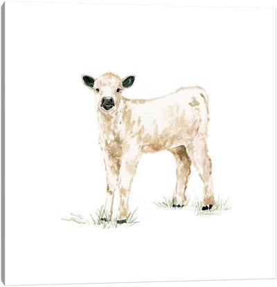 Calf Canvas Art Print