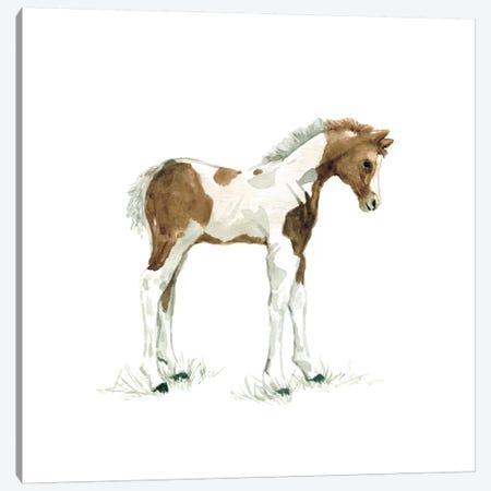 Colt Canvas Print #CRO66} by Carol Robinson Art Print