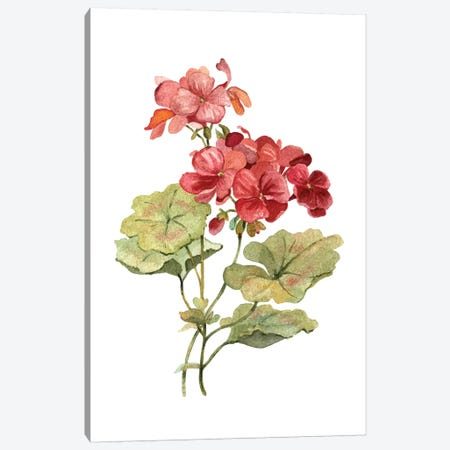 Scarlet Geranium Canvas Print #CRO678} by Carol Robinson Canvas Art
