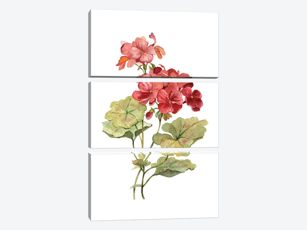 Scarlet Geranium by Carol Robinson 3-piece Canvas Wall Art