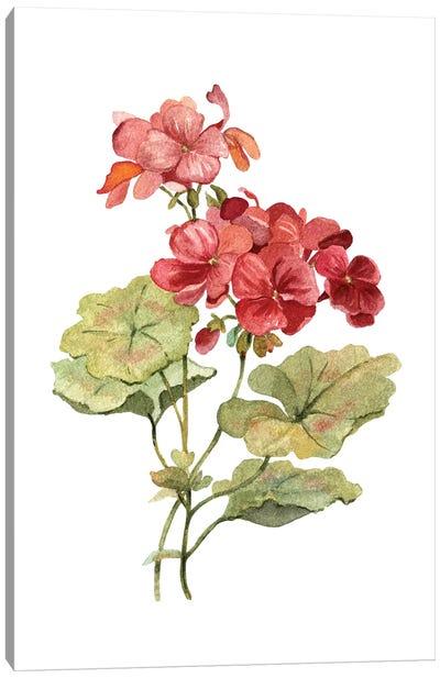 Scarlet Geranium Canvas Art Print
