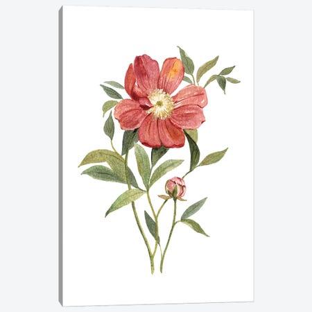 Scarlet Peony Canvas Print #CRO679} by Carol Robinson Canvas Wall Art