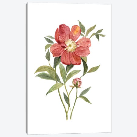 Scarlet Peony Canvas Print #CRO679} by Carol Robinson Canvas Wall Art