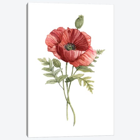 Scarlet Poppy Canvas Print #CRO680} by Carol Robinson Canvas Print