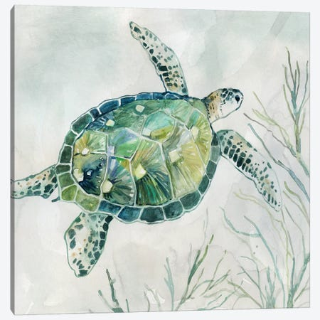 Seaglass Turtle I Canvas Print #CRO684} by Carol Robinson Canvas Artwork