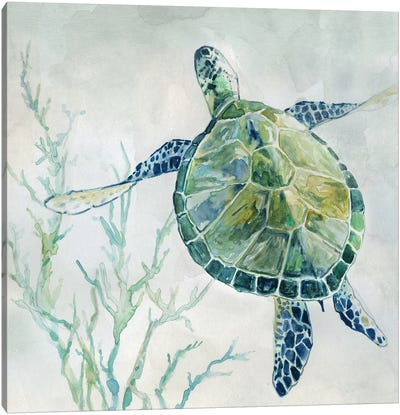 Seaglass Turtle II Canvas Art Print