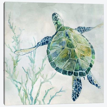 Seaglass Turtle II Canvas Print #CRO685} by Carol Robinson Canvas Wall Art