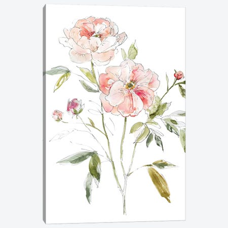 Sketchbook Cottage Rose I Canvas Print #CRO693} by Carol Robinson Canvas Wall Art