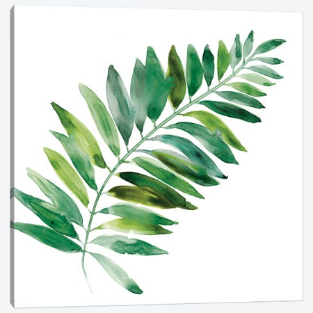 Tropical Frond II Canvas Print #CRO710} by Carol Robinson Canvas Print