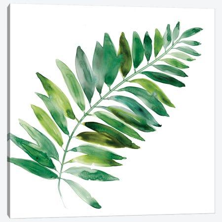 Tropical Frond II Canvas Print #CRO710} by Carol Robinson Canvas Print
