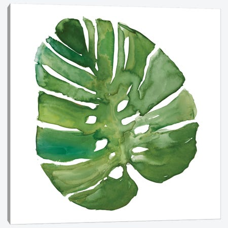 Tropical Frond III Canvas Print #CRO711} by Carol Robinson Art Print