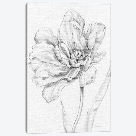 Tulip Sketch Canvas Print #CRO716} by Carol Robinson Canvas Artwork