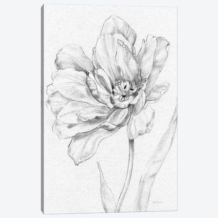 Tulip Sketch Canvas Print #CRO716} by Carol Robinson Canvas Artwork