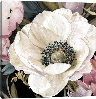 Anemone Study II Canvas Art Print