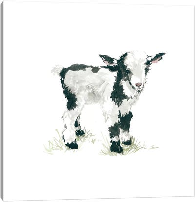 Goat Canvas Art Print