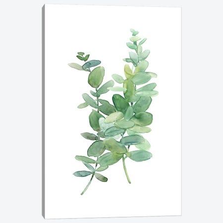 Eucolyptus I Canvas Print #CRO753} by Carol Robinson Canvas Print