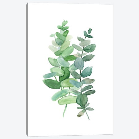 Eucolyptus II Canvas Print #CRO754} by Carol Robinson Canvas Artwork