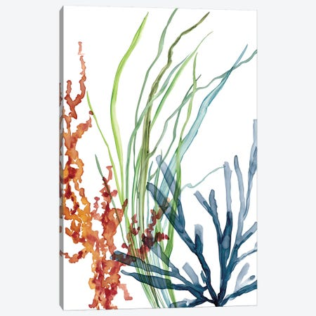 Ocean Garden I Canvas Print #CRO804} by Carol Robinson Canvas Wall Art